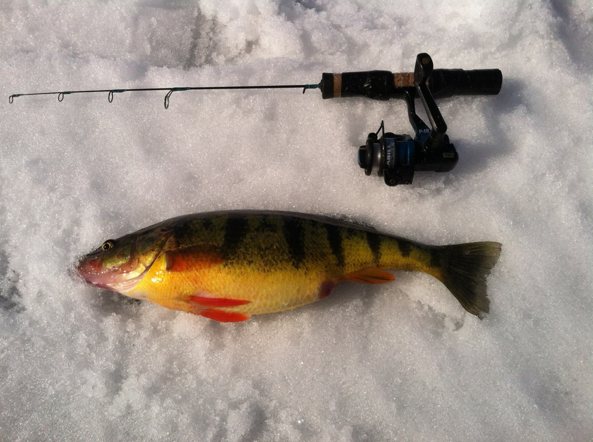 Ice fishing upstate guide service inc for Ice fishing perch