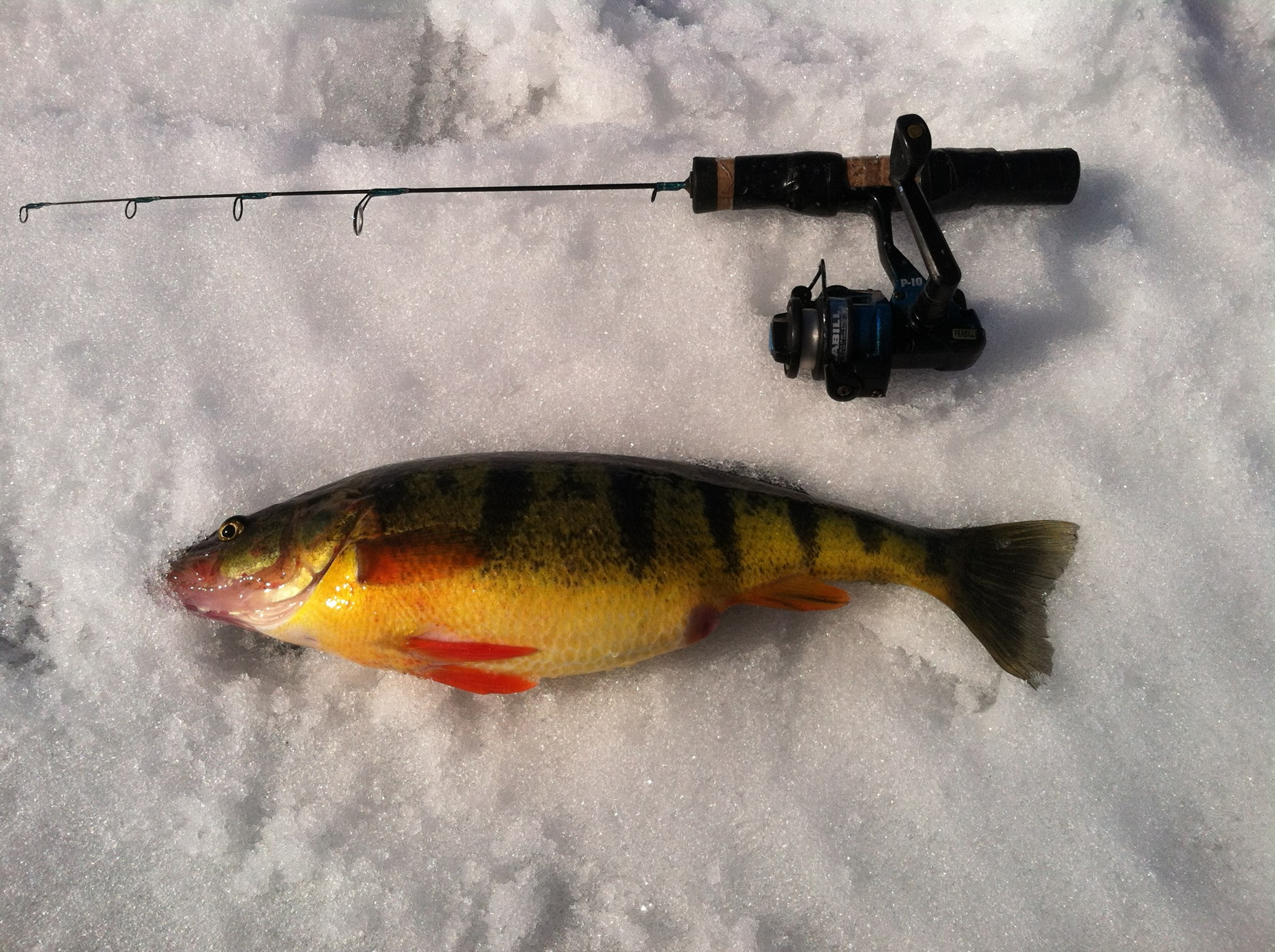 Upstate guide service safe enjoyable and successful for Ice fishing for perch